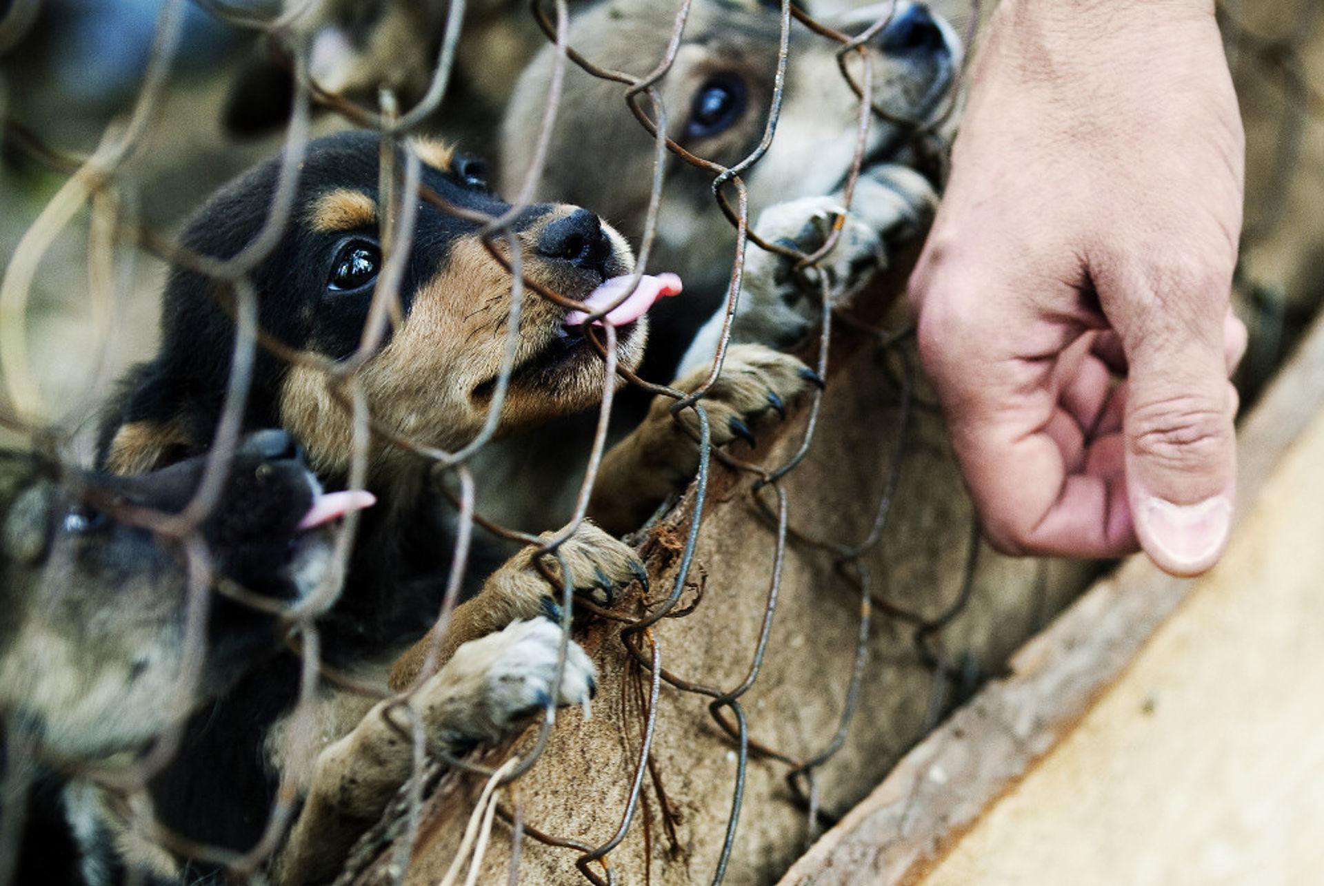 Брендинг приюта для животных